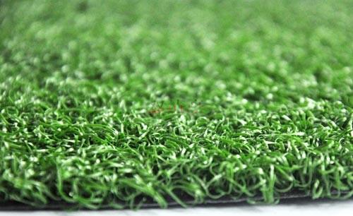 门球场草坪